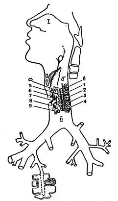 Схема местных защитных приспособлений дыхательной системы
