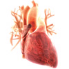 Первая помощь при острой боли в области сердца